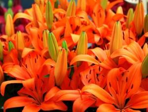 kvety3