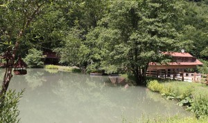 ranc-sugov